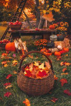 Autumn Scenes, Autumn Cozy, Autumn Fall, Autumn Aesthetic, Fall Pictures, Fall Season Pictures, Hello Autumn, Fall Harvest, Harvest Moon