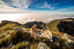 Think about taking your dog camping but not really sure how to go camping with dogs? Here are some great tips so your dog camping trip will be a great one. Go Camping, Camping Hacks, Camping Outdoors, Outdoor Camping, Backpacking Tips, Trekking, In Natura, Cute Dog Pictures, Scenery Pictures