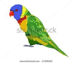 bird vector, parrot vector, rainbow lorikeet