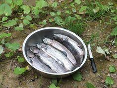 Fischen - Hotelprogramm im Dolcevitahotel Preidlhof