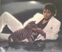 Michael Jackson images Michael and a cute little tiger fond d'écran and background photos Facts About Michael Jackson, Michael Jackson Images, Michael Jackson Thriller, Gary Indiana, Old School Music, The Jacksons, Hollywood, Funny Animal Memes, Neverland