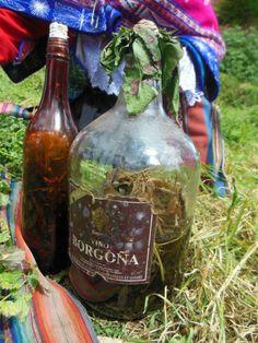 Taller Botanico - Alcohol de plantas medicinales