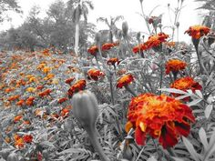 i love photos like this, that are black and white with a pop of color.  they're beautiful!