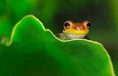Frog by Rick-0724, via Flickr