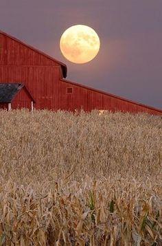 Harvest Moon -- johnrtitus