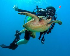Want to Swim with Turtles? Sorted.  Win a trip for 2 to Hawaii + 10,000 cash. Register today!    www.netregistry.com.au/sorted    #hawaii #win
