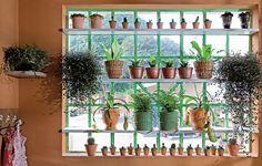 As plantas são de baixa manutenção. Anote os nomes: véu-de-noiva, asplênio, espadinhas, avenca e minicactos.