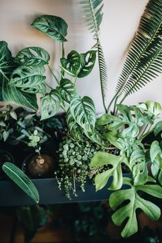 Living with Plants Happily Ever After: Q+A with Plant Tribe Book Author Plants have tribes , too and today we're going to talk all about plants because they make people happy and keep our air fresh and clean All About Plants, Real Plants, Growing Plants, House Plants Decor, Plant Decor, Best Office Plants, Belle Plante, Decoration Plante, Plants Are Friends