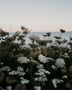 Photography Portfolio, Wildflowers, Summertime, Dandelion, Coast, Seasons, Sunset, Makeup, Nature
