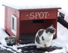 feral cat house on my garage