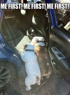 Fun Claw - Funny Cats, Funny Dogs, Funny Animals: Funny Pictures Of Dogs - 20 Pics