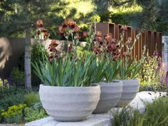 16 IDEAS for Using LARGE POTS:  Contemporary Containers Fuse Old & New...Spiky foliage & delicate petals of traditional English garden irises are paired with contemporary containers as old & new styles fuse together in garden design.