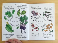 There's been so much to harvest this month, and of course lots to cook and preserve. So I decided to record not only the crops I've harvested, but also the dishes I created with them, because that's what really matters in my view! #journal #allotmentjournal #allotment #harvest #eatwhatyougrow #illustration #vegillustration #theydrawandcook #gardenjournal #drawing #sketch #watercolour #fruitandveg