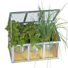 Serra con piante aromatiche  #garden #outdoor #home