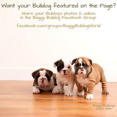 (2) Baggy Bulldogs - Baggy Bulldogs's Photos