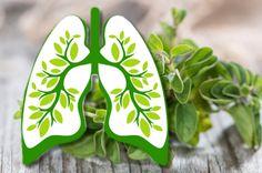 kräuter lunge-15 Pflanzen und Kräuter, die die Gesundheit der Lungen verbessern…