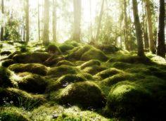 The lovely  woods of Sweden