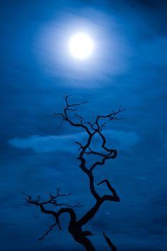 To the Moon by Darshana Abraham