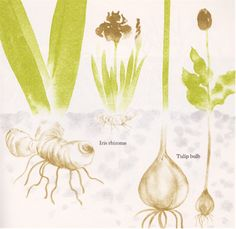 my vintage book collection (in blog form).: In the shop.... Plants in Winter - illustrated by Kazue Mizumura