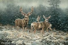 "rosemary millette paintings | Rosemary Millette Original Acrylic Painting:""Snowy Retreat-Mule Deer ..."