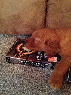 this is too cute #divergent Ha when you fall asleep reading divergent