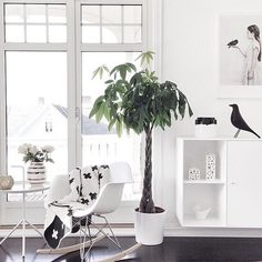 Love the blanket and the bird, houses and bowl on the shelves...
