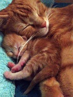 Tender mother cat love