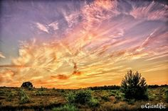 Traveling is great but sometimes nothing beats your own country!  Who would you take to watch this sunset? --------------------------- #giantific #veluwe #posbank #holland #sunset #dutch #sky #clouds #thenetherlands --------------------------- #landscape #landscape_lovers #scenary #landscape_captures #landscapephotography #landscapelover #landscapehunter #landschap #super_holland #dutch #holland --------------------------- #traveling #travelling#travel #traveljunkie #reizen #wanderlust…