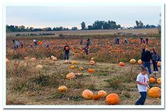 Linder Farms (pumpkin patch, corn maze, petting zoo, rides for kids and yummy fall comfort foods)