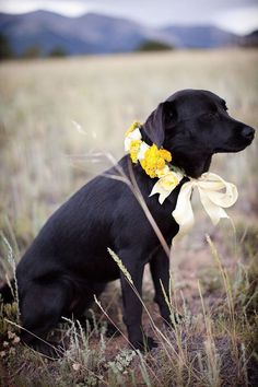 "This poor dog is giving the ""Why the heck do I have to wear these stupid flowers"" look. However, i still like the idea."