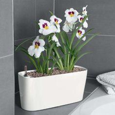 Self-Watering Planter for Windowsills/Small Spaces Brookstone,http://www.amazon.com/dp/B004S0I73A/ref=cm_sw_r_pi_dp_giZFsb1G8R3C8JBS