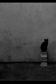 Kitty: The Book Lover