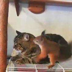 Funny Animal Jokes, Cute Funny Animals, Cute Cats, Cute Squirrel, Squirrel Feeder, Squirrels, Cute Animal Videos, Cute Animal Pictures, Unlikely Animal Friends