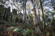 """Unimelb Outdoor Gallery First Exhibition (Image attribution – Photograph, """"Hanging Rock"""" by Marley Holloway-Clarke) Melbourne, Vibrant, Photograph, Culture, Rock, Gallery, Plants, Outdoor, Image"""