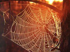 Autumn cobwebs.