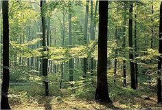Enchanted Forest Huge Wall Mural 12 Feet 6 Inch Wide x 9 Feet High Covers an Entire Wall