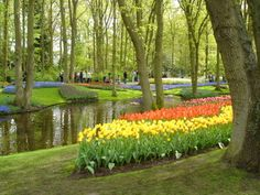 The Keukenhof Gardens in the Netherlands