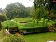 Травяная крыша. Калифорния, США.