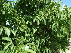 Remedies, Herbs, Garden Ideas, Gardening, Medicine, Agriculture, Plant, Life, Home Remedies