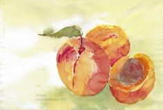 Sommer / Summertime / Verano / Été / 暑期 Peach, Watercolor Painting, Summer Time, Water Colors, Peaches