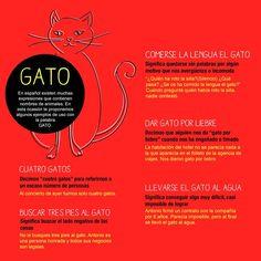 Expresiones en español: gato