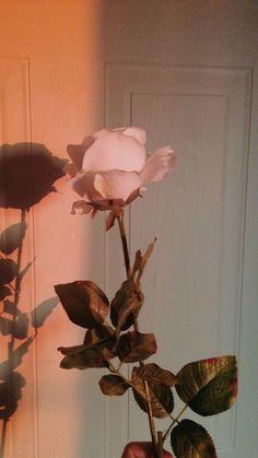 Tumblr Wallpaper, Screen Wallpaper, Flower Wallpaper, Wallpaper Backgrounds, Trendy Wallpaper, Wallpaper Quotes, Rose Gold Wallpaper, Music Wallpaper, Aesthetic Pastel Wallpaper