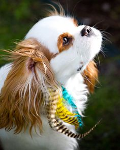 Feather extensions for dogs. Ha! I think Miles' daddy would kill me if I went there.