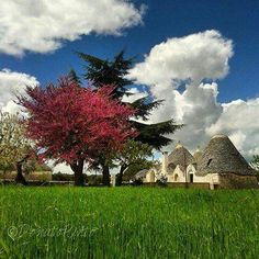 Trulli and country