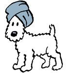Snowy with a turban!