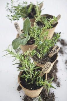 Diy Growing Rosemary Indoor And Outdoor Diy Garden Ideas