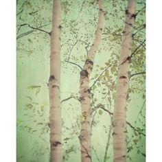 pa nature birch scenes - Google Search