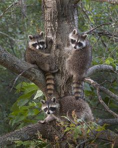 A trio of bandits