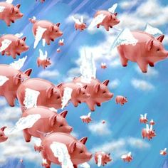 pigs | Ballmers Out? When Pigs Fly! - Kara Swisher - News - AllThingsD