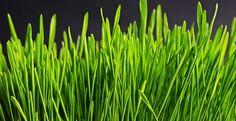 4 sposoby na idealny trawnik